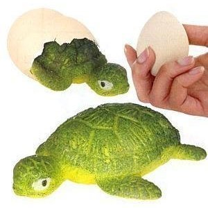 Turtle egg magic growing pet toys games - Gardening for pets ...