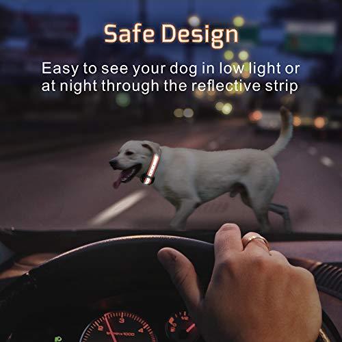 Buy shock collars for big dogs