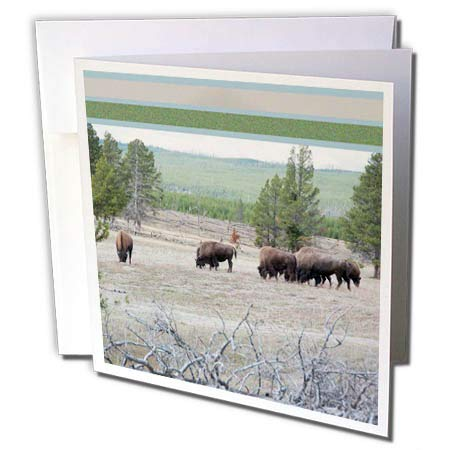 3dRose Jos Fauxtographee- Framed Top Bison Foraging - A Feild of Bison grazing on The Grass in Yellowstone with top Frame - 1 Greeting Card with Envelope (gc_294261_5)