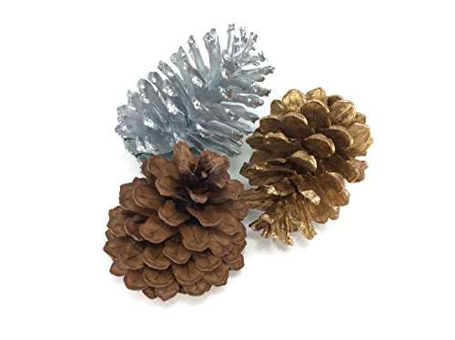 Pinecones Conifer Cone Silver Gold Brown Craft Seed Handmade Wedding Decorative 3 Pieces (Scroll Wastebasket)