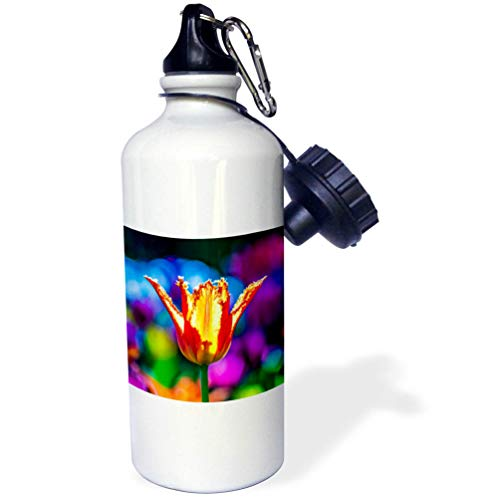 3dRose Alexis Photography - Flowers Tulips - Breathtaking Orange Tulip Flower. Colorful Backdrop. Beauty of Spring - 21 oz Sports Water Bottle (wb_294739_1) by 3dRose