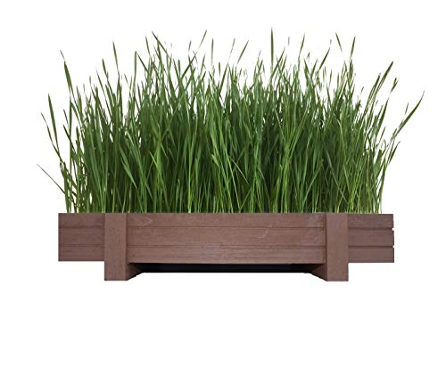 Certified Organic Wheatgrass Kit with Beautiful Wooden Countertop Planter, Wonder Soil, Organic Wheatgrass Seeds, Spray Bottle & Easy to Follow Instructions. 100% Guaranteed to Grow. (Best Organic Wheatgrass Seeds)