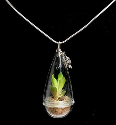 Miniature Green Jade Succulent Terrarium Necklace Wearable Succulent Necklace Nature Terrarium Jewelry
