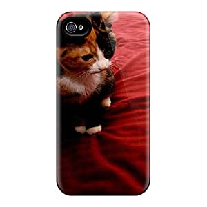 Forever Collectibles Cute Calico Hard Snap-on Iphone 6 Cases
