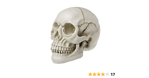 Skeleton Head Studying Teaching Supplies Medical Instrument with Magnetic Connection DMZH Coloured Human Anatomy Skull Model Kit