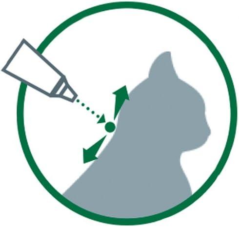 ADVANTAGE Chat – Anti-Puces pour Chats – Moins de