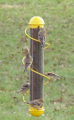 Nyjer Tube Feeder - Bird Quest SBF2Y 17
