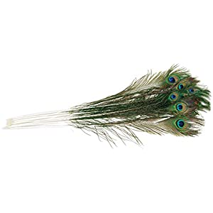 """Zucker Feather (TM) - Peacock Feather Eyes Natural - 25-35""""-12pcs 14"""