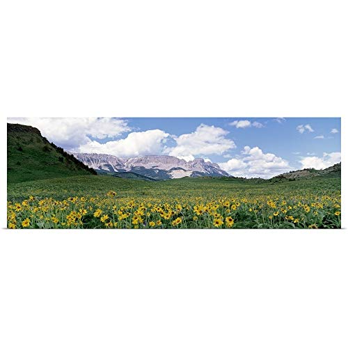 GREATBIGCANVAS Poster Print Entitled Meadow Rocky Mountain Front MT by 60
