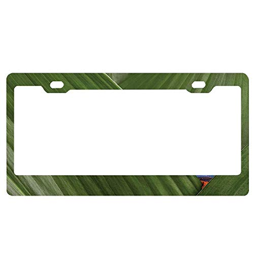 ABLnewitemFrameFF Red Eyed Tree Frog Hiding in Exotic Macro Leaf in Costa Rica Rainforest Tropical Nature Photo License Plate Novelty Auto Car Tag Aluminum License Plate Cover .(12x6)