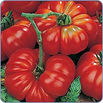 Germination Seeds: 50 - Seeds: Rare!!! Costoluto Genovese Tomato - A Great Italian Tomato!!!!!
