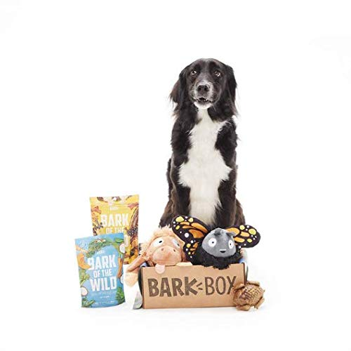 BarkBox Starter Kit Assortment Dog Plush Toys, Chew Toys, Squeak Toys, All-Natural Treats/Chews Made in The USA (2 Toys, 2 Treats & 1 Chew (USA Made), Large Dog)