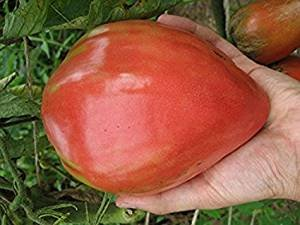 David's Garden Seeds Tomato Beefsteak Oxheart D49116H (Red) 100 Organic Heirloom Seeds
