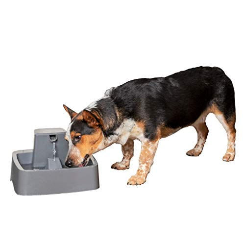 PetSafe Drinkwell 1 Gallon Dog and Cat Water Fountain, Best for Cats and Small to Medium Dog Breeds, Easy-to-Clean Design, Filter Included (Pump Gallon Water 1)