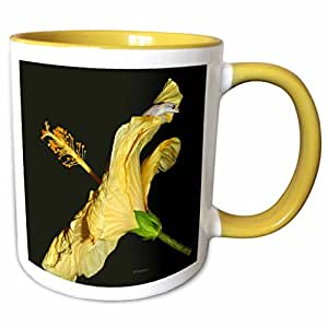 3dRose Sandy Mertens Flower Designs - Side View of Gray Anole on Yellow Hibiscus of Hawaii - 11oz Two-Tone Yellow Mug (Mug_107129_8)