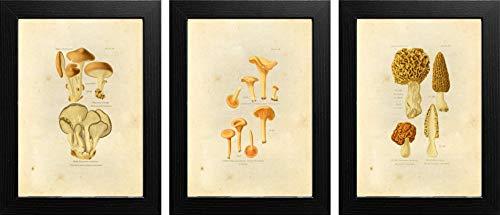 Ink Inc. Edible Mushrooms Vintage Botanical Print Wall Art – Set of 3 – 8x10 Matte ()