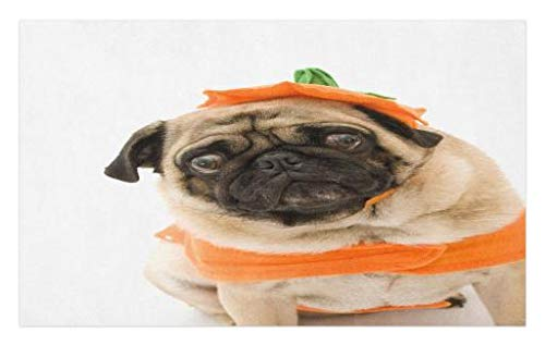 Lunarable Pumpkin Doormat, Pug with a Pumpkin Costume for Halloween Trick or Treat Cute Animals Photo, Decorative Polyester Floor Mat with Non-Skid Backing, 30 W X 18 L Inches, Ivory Orange Black