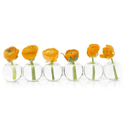 Art Vase Bud Glass (Chive – Caterpillar, Small Clear Glass Bud Vase for Short Flowers, Unique Low Sitting Flower Vase, Cute Floral Vase for Home Decor, Weddings, Floral Arrangements, Arranging, Set of 6 Round Balls)