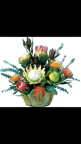 - Protea Fresh and Real Floral Arrangements. Grown in Hawaii 10-13 Inch Stems