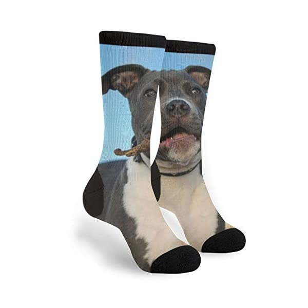 American Pit Bull Terrier Puppy Men's Women's Cool Novelty Crew Socks Unisex Casual Funny Crazy Dress Socks 1