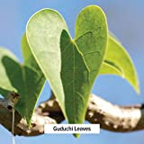 Banyan Botanicals Guduchi Stem Powder - USDA