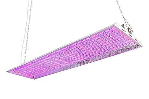 Magenta Led Grow Light