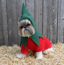 Dog Chili Pepper Costume - M -