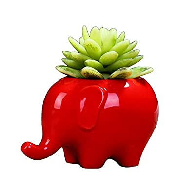 Gift Prod 1 Pcs Elephant Plant Window Boxes with Tray Cute Elephant Flower Pot, Modern Red Ceramic Succulent Planter Pots/Tiny Flower Plant Containers (Style 16) : Garden & Outdoor