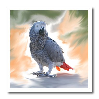 3dRose ht_4030_1 African Grey Parrot-Iron on Heat Transfer Paper for White Material, 8 by (Parrot Iron On Transfers)