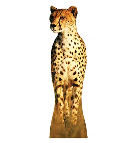 Cheetah - Advanced Graphics Life Size Cardboard Standup
