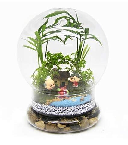 KINGDUO Bulbo Formado DIY Moss Micro Paisaje Botella De Vidrio Plantas Suculentas Florero Casa Decoración