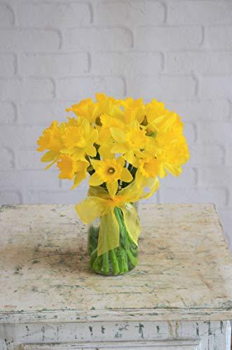 March Birthday: Daffodils - Fresh Flowers Hand -