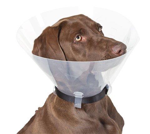 Hunde-Halskrause 30,00 cm K81118 top Qualität