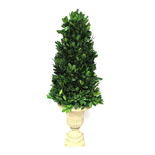 Teters Floral Preserved Collection Boxwood Topiary, - Topiary Spring