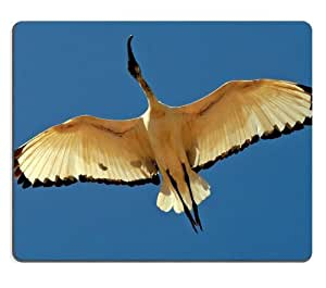 Africa Ibis Ibises Bird Wildlife Mouse Pads Customized Made to Order Support Ready 9 7/8 Inch (250mm) X 7 7/8 Inch (200mm) X 1/16 Inch (2mm) High Quality Eco Friendly Cloth with Neoprene Rubber Luxlady Mouse Pad Desktop Mousepad Laptop Mousepads Comfortable Computer Mouse Mat Cute Gaming Mouse pad