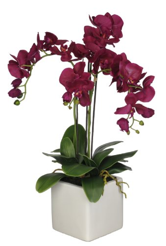 Artificial-Triple-Stem-Phalaenopsis-Orchid-in-White-Cube