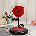Beauty-and-The-Beast-Rose-Handmade-Guaranteed-Flower-Perfect-Rose-on-Glass-Dome-High-end-Gift-Box-Mother-Wedding-Valentines-Day-Birthday-Present