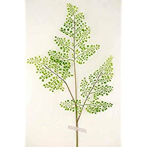 "Richland Fern Branch 34"" Forest Maidenhair 12 Pack 91"