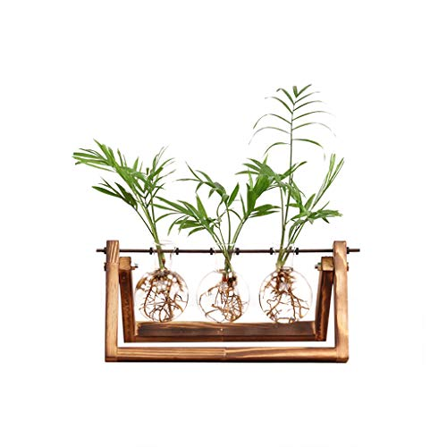 Ivolador Desktop Glass Planter Bulb Vase with Retro Solid Wooden Stand and Metal Swivel Holder for Hydroponics Plants Home Garden Wedding Decor (3 Bulb Vase) (Containers Bulbs Plant)