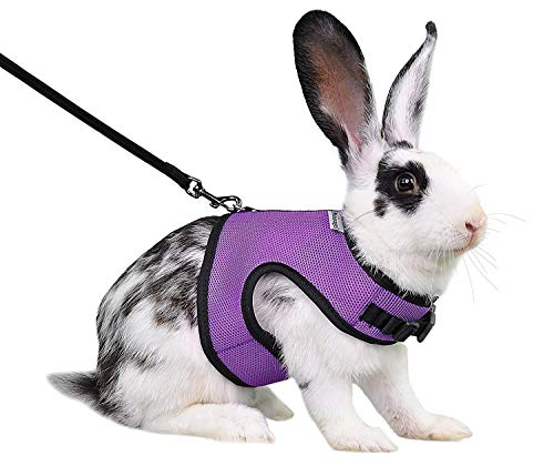 Niteangel Adjustable Soft Harness with Elastic Leash for Rabbits (M, Purple)