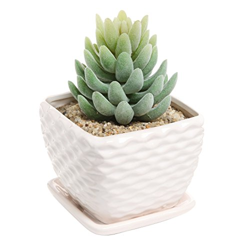 Contemporary Ceramic Succulent Decorative Drainage