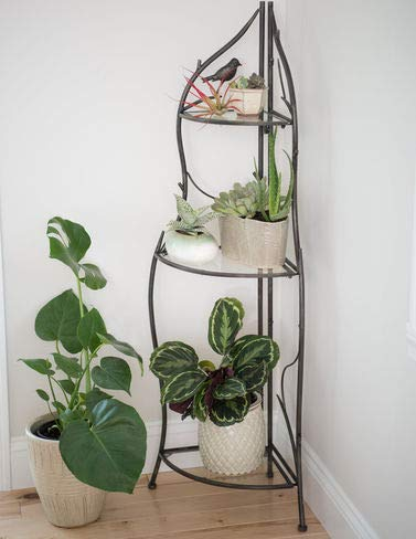 12c4347a6aeb Image Unavailable. Image not available for. Color: Branch Corner Plant Stand