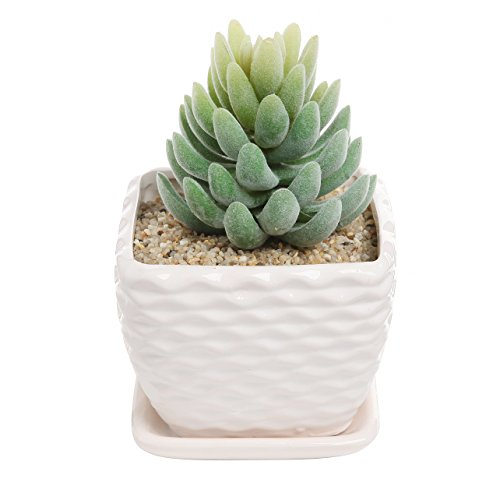 Wavy White Ceramic Succulent Planter with Drainage Plate