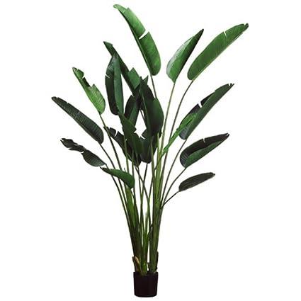 Amazon Com 7 9 Bird Of Paradise Silk Palm Tree W Pot Green Pack