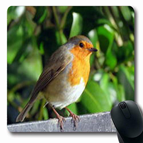 Pandarllin Mousepads Perching Robin Perched On Railing Plumage Sewerby Park Wildlife Nature European Oblong Shape 7.9 x 9.5 Inches Oblong Gaming Mouse Pad Non-Slip Rubber Mat