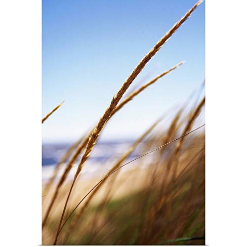 GREATBIGCANVAS Poster Print Wheat Grass at Lake, Park Point Beach, Duluth, MN by 12