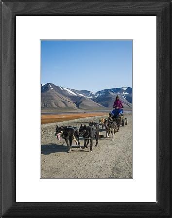 Impresión enmarcada perro Husky sobre ruedas trineo de, Svalbard, Longyearbyen, Noruega, Escandinavia