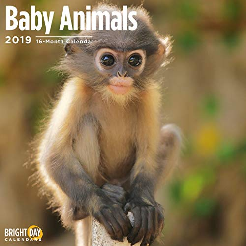 Baby Animals 2019 16 Month Wall Calendar 12 x 12 Inches