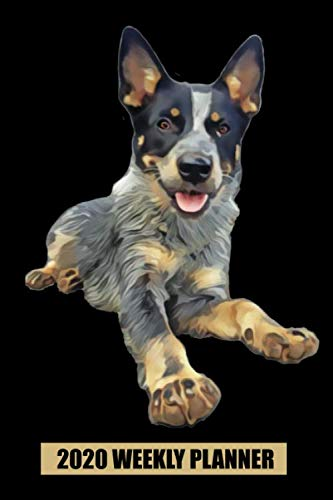 2020 Weekly Planner: Queensland Heeler Blue  Laying Down: Portable Format