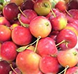 Melissa's Fresh Crab Apples (3lb)